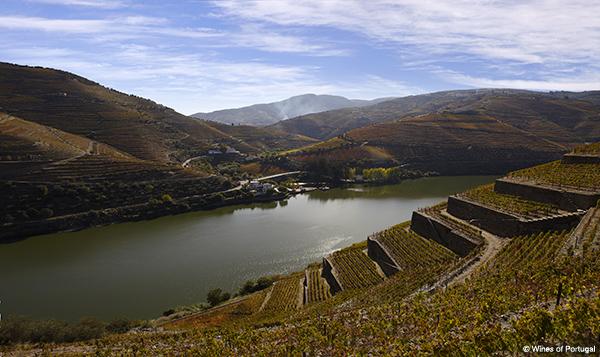 Douro Weinbau Portwein