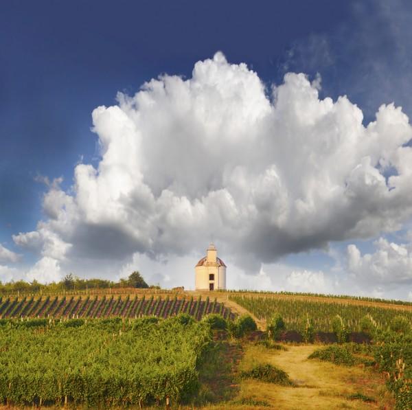 Weinberge im Anbaugebiet Tokaj