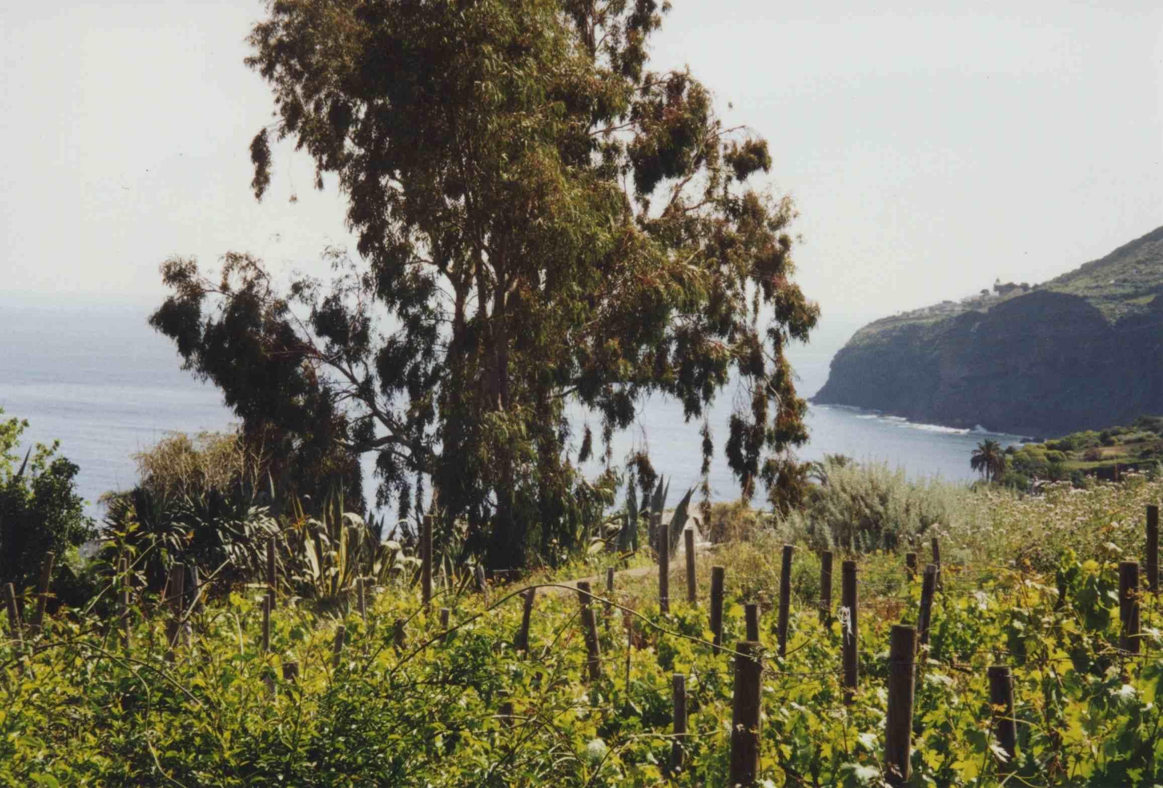 Wein auf Salina