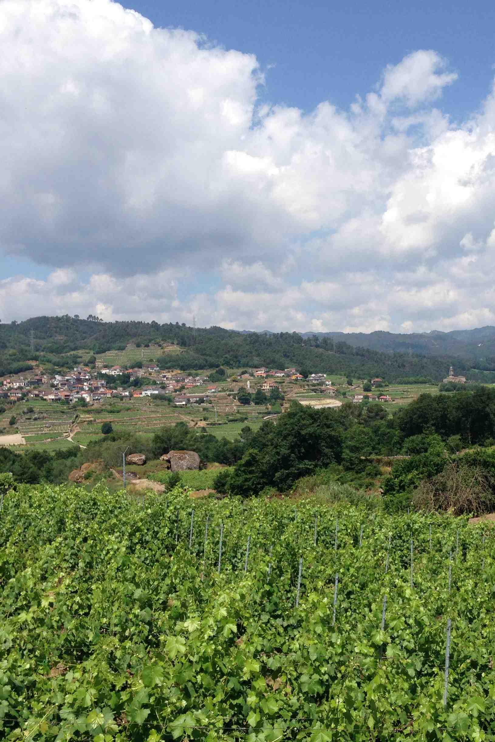 Weinberge bei Ribadavia in Ribeiro