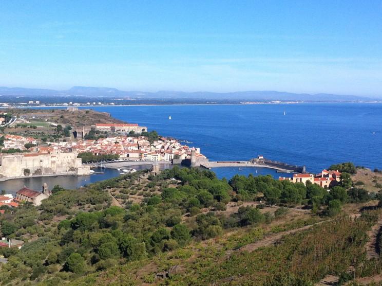 Wein auf den Huegeln um Collioure