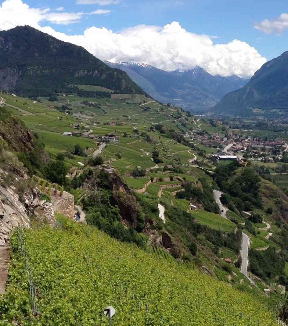 Weinlagen im Wallis